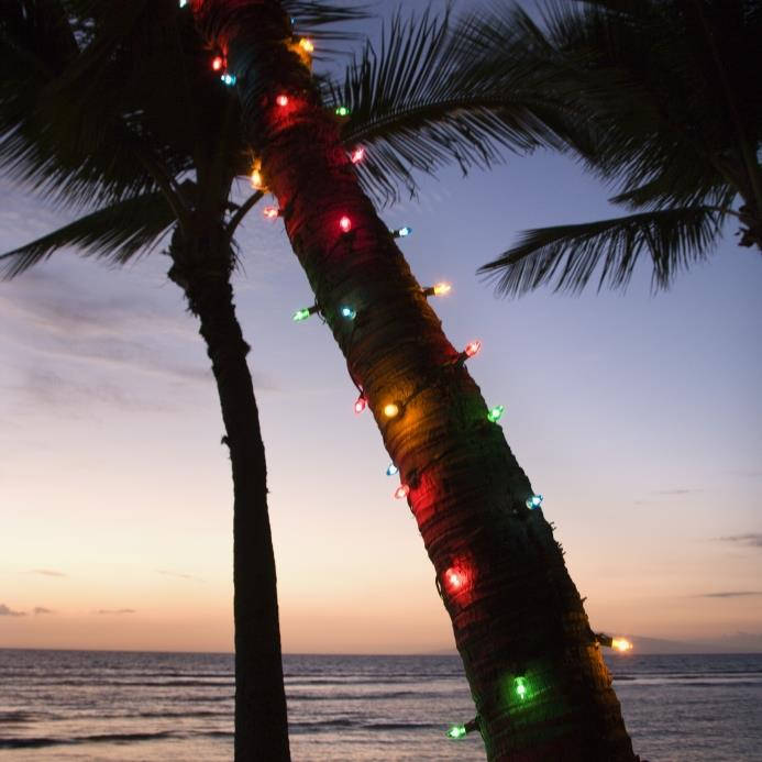 Local Expert Gina Birch, Highlights The 10 Best Holiday Attractions in Southwest Florida